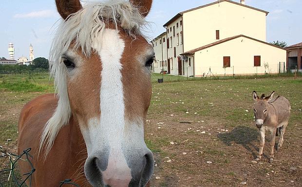Gli animali insegnano foto del giorno corriere del veneto for Piani di fattoria del sud