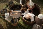 Vendemmia - Una scena del film Il Leone di vetro che  sarà presentato martedì 8 aprile al Vinitaly a Verona nello stand del Consorzio Vini Venezia e narra le vicende di una famiglia di produttori di Raboso