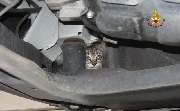 Il gatto nel motore - Un gattino è rimasto incastrato nel vano motore di un'auto, è stato liberato dai vigili del fuoco