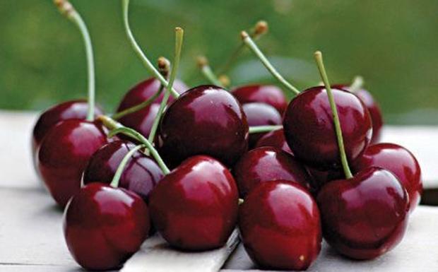 Speranza rossa - Sono giorni di raccolta e di festeggiamenti per i coltivatori delle ciliegie, in particolare nell'area di Marostica