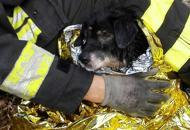 Cagnolina cade in un tubo Salvata dai vigili del fuoco | Fotogallery | Video