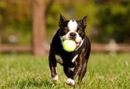 Weekend con il cane Passeggiate e itinerari Guarda la fotogallery