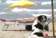 Spiagge, i Comuni devono indicarei tratti dove accedere con i cani