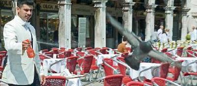 Coperchi e spruzzini, guerra dei caff� contro i gabbiani | Fotogallery