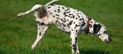 �Pip� vietata ai cani, va raccolta� Bufera sul divieto di Torri del Benaco