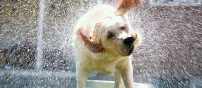 Corriere Della Sera Gli Animali E Il Caldo Powermall