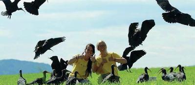 La migrazione, il lungo volo degli ibis