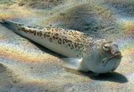 Punto da pesce ragno in alto mare Veronese in choc anafilattico:salvato dalla Guardia Costiera