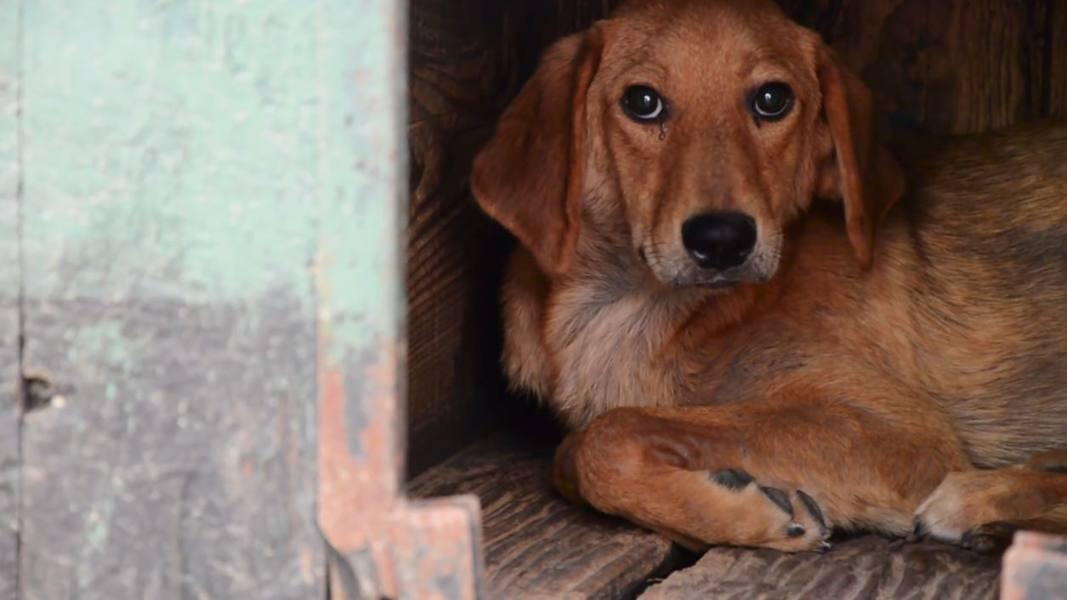Arriva l'inverno, cuccioli al freddo Servono cucce per i cani abbandonati
