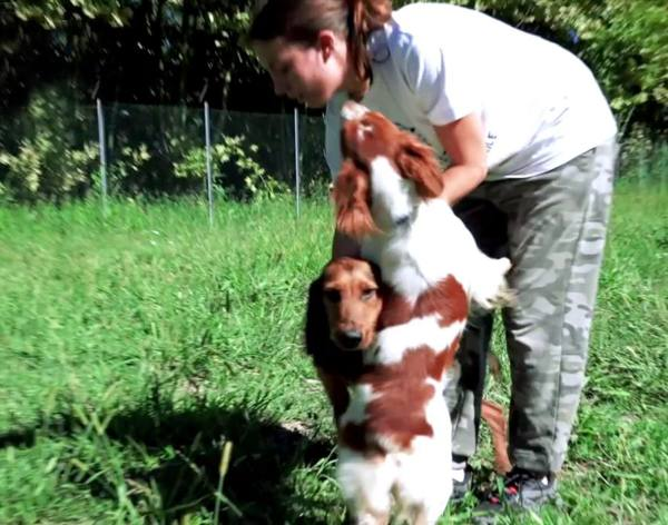 Flock e Frida cercano famiglia Chi adotta questi cuccioli?