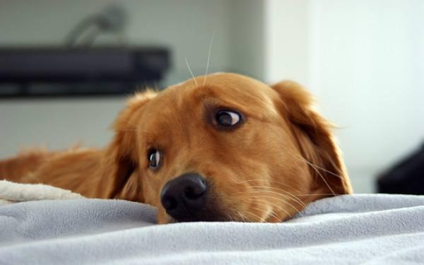 Anziano morto da una settimana vegliato per giorni dal cagnolino