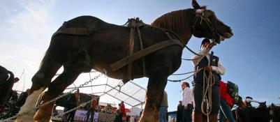 Fieracavalli in crescita,3000 equini e 760 espositori