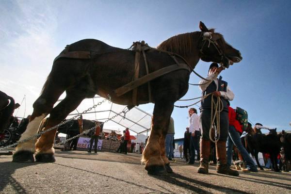 Fieracavalli, 3000 equini e 760 espositori