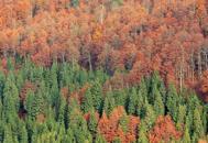 Boschi, altipiani e spiagge I colori dell'autunno