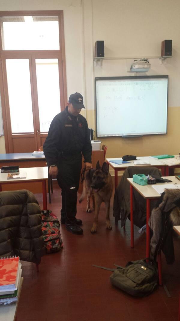 Droga, blitz al Franchetti e alle Stefanini cani e carabinieri irrompono a scuola