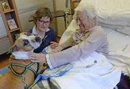 Pet-therapy in ospedale a VeneziaCani in corsia TUTTE LE FOTO
