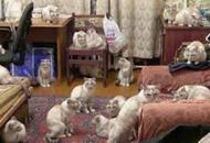 Quaranta gatti in 70 metri quadri L'Usl sgombera l'appartamento