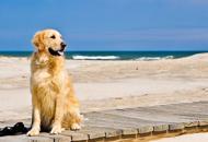 Porta i cani in spiaggia, maxi multaE Zaia litiga con il sindaco di Jesolo