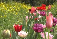 Villa Pisani Bolognesi Scalabrin diventaun  giardino impressionista olandese