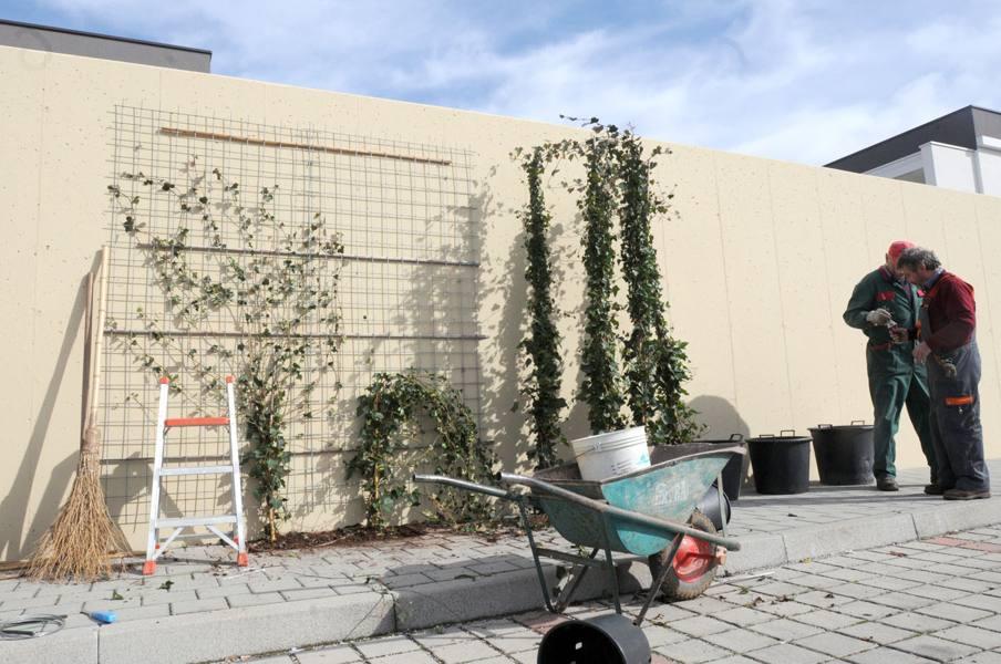 Dopo le polemiche i giardinieri barriera verde sul muro for Giardinieri verona