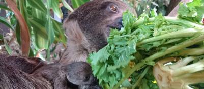 Mamma Wendy e la sorpresa del baby bradipo | VIDEO