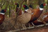 Scoperto focolaio di aviaria,abbattuti duecento capi