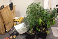 Coltivavano marijuana in casaarrestati artigiano e disoccupatoGuarda il video dell'operazione