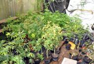 Coltivava marijuana nel garagePadre di famiglia arrestato |Video