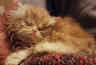 Gatti, è allarme abbandoni«Decine in pochi giorni»