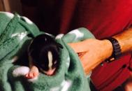 Cuccioli gettati in un cassonettoI vigili del fuoco ne salvano uno