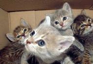 Mici abbandonati, ci sono 131 esposti «Servono i gattili, è un allarme rosso»