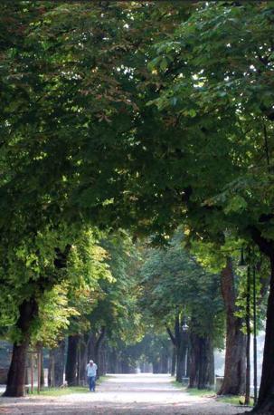 Solo all'ombra dei castagni selvatici puoi riposare le stanche membra e godere di un silenzio irreale. Viale Bartolomeo d'Alviano, Treviso