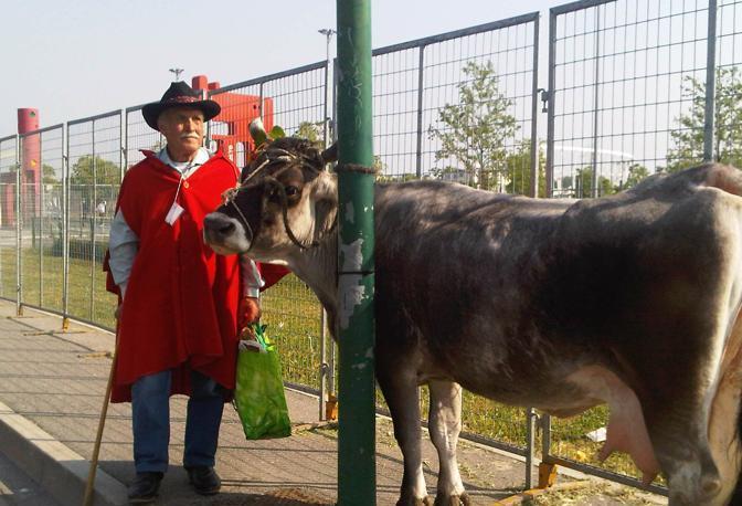 «Bepi» Manente e la sua mucca (Bertasi)