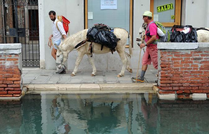 Asini a per le calli di Venezia in occasione della conferenza internazionale sulla decrescita