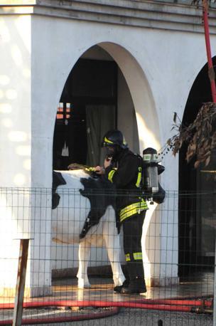 Ormelle, l'incendio al caseificio