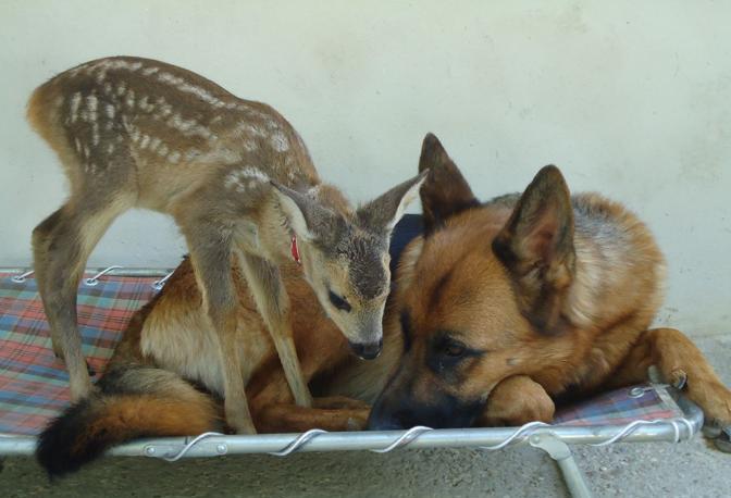 I due animali divenuti amici