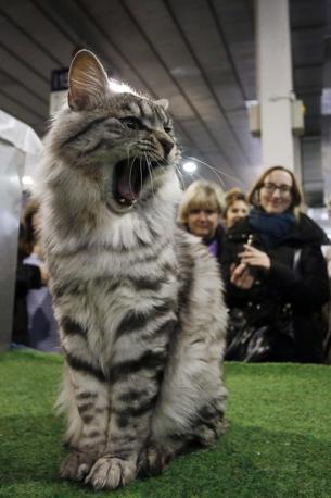 A padova i gatti pi belli del mondo corriere veneto - I mobili piu belli del mondo ...