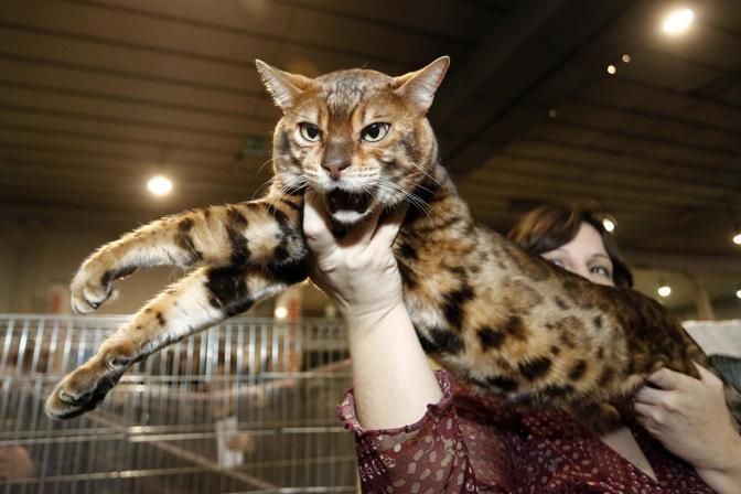 A padova i gatti pi belli del mondo corriere veneto for I mobili piu belli del mondo