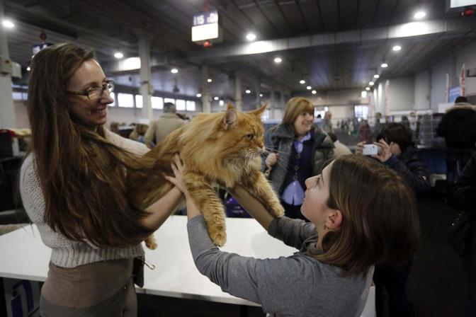 Padova, in Fiera i gatti più belli del mondo