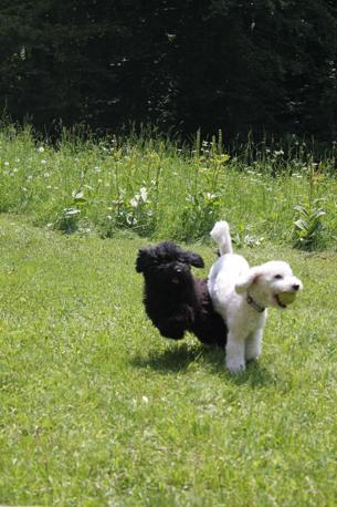 Giocare e correre tra il verde  è un'attività necessaria e terapeutica per i cani