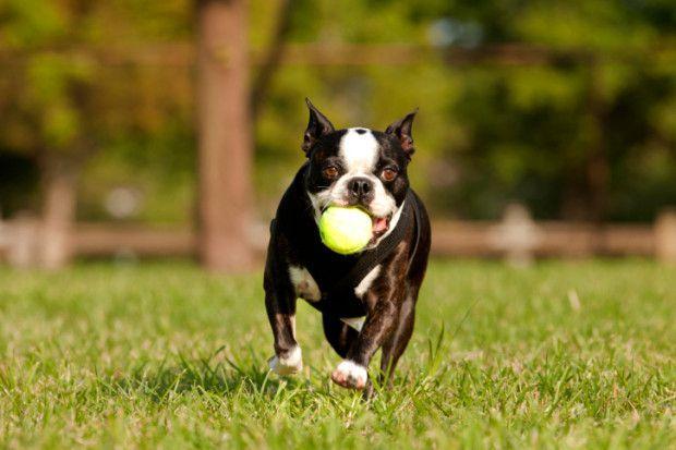 Correre e giocare liberi tra l'erba è uno dei bisogni primari di ogni cane