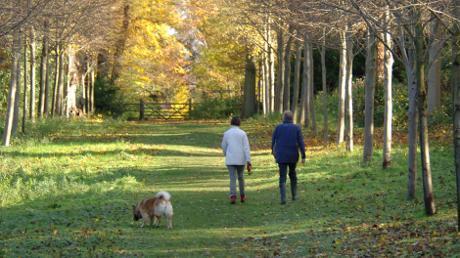 Passeggiare con i cani è un ottimo modo per tenersi in forma