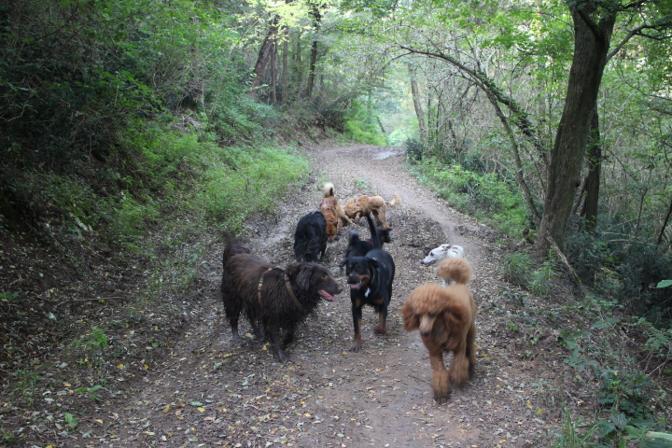 Gruppo di pelosi in passeggiata sui Colli Euganei con l'associazione Pet Project
