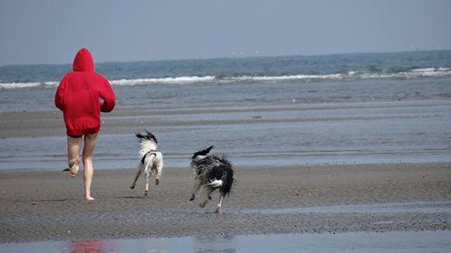 Corsa lungo la spiaggia con i cani