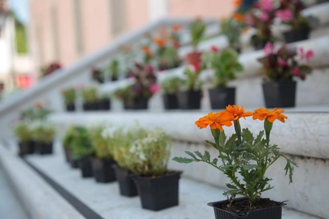 Piante e fiori alla manifestazione