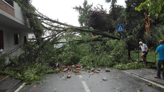 Albero caduto a Mestre tra via Pasqualigo e via Ortisei
