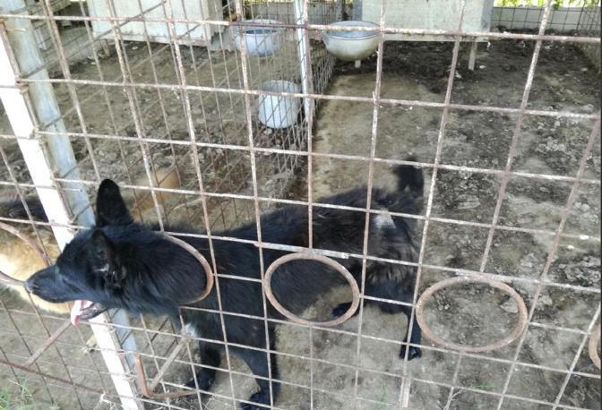 Le gabbie in cui venivano rinchiusi gli animali