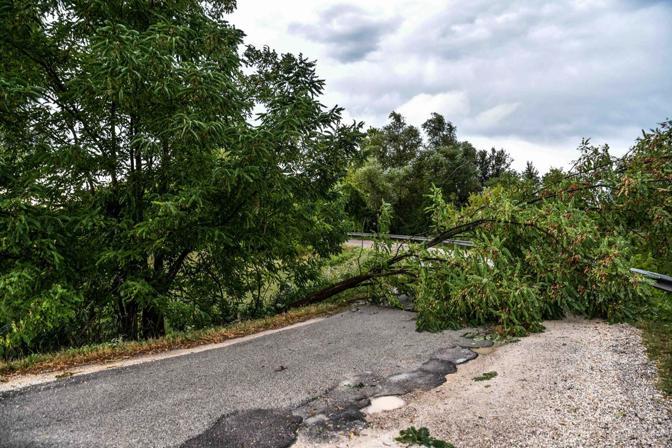 Padova, un albero caduto in via Pedanio (Bergamaschi)