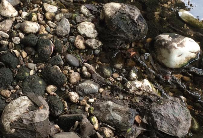 La denuncia del Movimento 5 Stelle: «Brenta inquinato dai metalli»