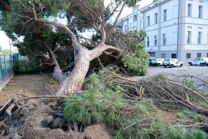 Porto Viro, i danni del maltempo